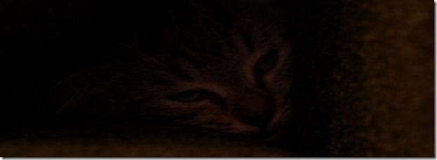 Katze im dunkeln